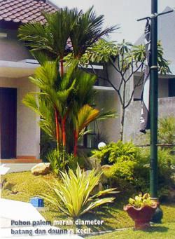 Memilih Pohon Untuk Halaman Rumah