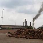 Biomassa Riau jadi sumber listrik terbesar Sumatera