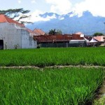 Lahan pertanian produktif banyak menjadi perumahan