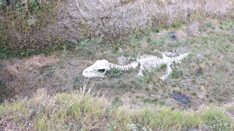 Spot selfi dengan latar belakang fosil dinosaurus yang seolah-olah baru digali di kedalaman puluhan meter dari permukaan tanah